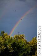 Две птицы летят на фоне двойной радуги. Стоковое фото, фотограф Юлия Морозова / Фотобанк Лори