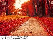 Купить «Дорожка, усыпанная жёлтыми листьями в осеннем парке», фото № 23237231, снято 28 сентября 2013 г. (c) Зезелина Марина / Фотобанк Лори
