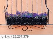 Купить «Фиолетовые цветы Лобелии в кованом металлическом кашпо», фото № 23237379, снято 20 июля 2019 г. (c) Зезелина Марина / Фотобанк Лори