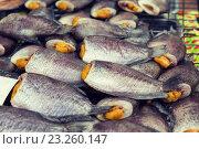 Купить «stuffed fish or seafood at asian street market», фото № 23260147, снято 7 февраля 2015 г. (c) Syda Productions / Фотобанк Лори