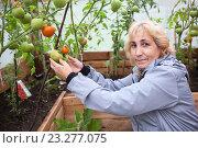 Купить «Женщина показывает красные спелые и зеленые помидоры на ветке», фото № 23277075, снято 28 августа 2015 г. (c) Кекяляйнен Андрей / Фотобанк Лори