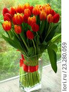 Букет тюльпанов. Стоковое фото, фотограф Ольга Зотова / Фотобанк Лори