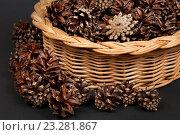 Сосновые шишки в корзине. Стоковое фото, фотограф Сергей Панкин / Фотобанк Лори