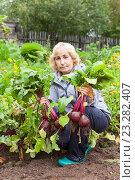 Купить «Женщина средних лет снимает урожай свеклы на огороде с грядки», фото № 23282407, снято 28 августа 2015 г. (c) Кекяляйнен Андрей / Фотобанк Лори