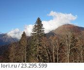 Купить «Горные вершины в дымке облаков, осенний лес, Красная Поляна, Россия», фото № 23295599, снято 28 октября 2015 г. (c) DiS / Фотобанк Лори