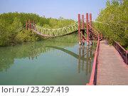 Купить «Подвесная деревянная туристическая дорожка в мангровых зарослях. Окрестности Хуа Хина, Южный Таиланд», фото № 23297419, снято 5 января 2014 г. (c) Виктор Карасев / Фотобанк Лори