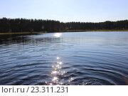 Купить «Лесное озеро вечером», фото № 23311231, снято 27 июля 2014 г. (c) Азаркевич Андрей / Фотобанк Лори