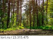 Купить «Дорога в весеннем сосновом лесу», фото № 23315475, снято 5 мая 2016 г. (c) Зезелина Марина / Фотобанк Лори