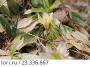 Первые цветы. Стоковое фото, фотограф Надежда Шапкина / Фотобанк Лори