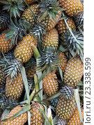Купить «Pineapples, Ambalangoda, Sri Lanka», фото № 23338599, снято 21 июля 2019 г. (c) age Fotostock / Фотобанк Лори