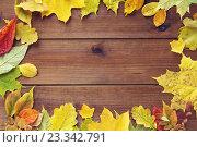 Купить «frame of many different fallen autumn leaves», фото № 23342791, снято 19 октября 2015 г. (c) Syda Productions / Фотобанк Лори