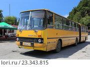 Купить «Желтый городской сочленённый автобус Ikarus 280, Гагра, Абхазия», эксклюзивное фото № 23343815, снято 22 июля 2016 г. (c) Алексей Гусев / Фотобанк Лори