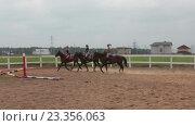 Купить «Три наездницы скачут на лошадях внутри загона», видеоролик № 23356063, снято 27 июля 2016 г. (c) Кекяляйнен Андрей / Фотобанк Лори