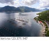Купить «Рыбная ферма в Которском заливе, Адриатическое море, Черногория», фото № 23371147, снято 5 июня 2016 г. (c) Кекяляйнен Андрей / Фотобанк Лори
