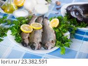 Купить «Close up view at sea eel fish ready for cooking», фото № 23382591, снято 30 марта 2020 г. (c) Яков Филимонов / Фотобанк Лори
