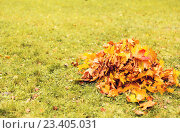 Купить «heap of fallen maple leaves on grass», фото № 23405031, снято 10 октября 2015 г. (c) Syda Productions / Фотобанк Лори