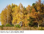 Осенний лес. Стоковое фото, фотограф Игорь Аникин / Фотобанк Лори
