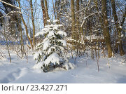 Купить «Молодая елочка в зимнем лесу», эксклюзивное фото № 23427271, снято 24 января 2016 г. (c) Елена Коромыслова / Фотобанк Лори