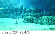 Купить «Акулы и рыбы в большом аквариуме», видеоролик № 23428475, снято 24 октября 2014 г. (c) Elnur / Фотобанк Лори