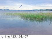 Купить «Летний пейзаж на озере Селигер», фото № 23434407, снято 5 июня 2016 г. (c) Татьяна Белова / Фотобанк Лори