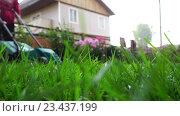Купить «Woman with lawnmower in the backyard», видеоролик № 23437199, снято 27 августа 2016 г. (c) Игорь Жоров / Фотобанк Лори