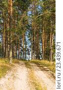 Купить «Грунтовая дорога в сосновом лесу. Лесной пейзаж», эксклюзивное фото № 23439671, снято 12 августа 2016 г. (c) Макаров Алексей / Фотобанк Лори