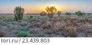 Купить «Вечерний закат в степной пустыне. Казахстан», эксклюзивное фото № 23439803, снято 13 июля 2016 г. (c) Николай Сивенков / Фотобанк Лори