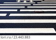 Zebra crossing with white marking lines and direction of motion on asphalt, фото № 23443883, снято 31 июля 2016 г. (c) FotograFF / Фотобанк Лори