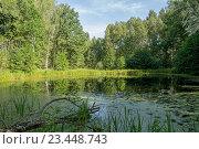 Красивое лесное озеро. Стоковое фото, фотограф MARINA EVDOKIMOVA / Фотобанк Лори