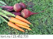 Морковь и свекла на траве. Стоковое фото, фотограф Наталия Макарова / Фотобанк Лори