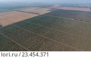 Купить «Вид с воздуха на обширные виноградники», видеоролик № 23454371, снято 22 августа 2016 г. (c) Михаил Коханчиков / Фотобанк Лори