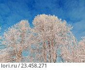 Купить «Winter landscape», фото № 23458271, снято 25 января 2016 г. (c) Александр Fanfo / Фотобанк Лори