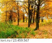 Купить «Осенний пейзаж с дубовой рощей и желтыми опавшими листьями», фото № 23459567, снято 16 октября 2010 г. (c) Зезелина Марина / Фотобанк Лори