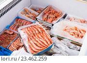 Купить «Chilled Mediterranean seafoods close up on counter», фото № 23462259, снято 24 февраля 2020 г. (c) Яков Филимонов / Фотобанк Лори