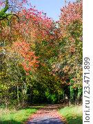 Купить «Осенний лес», фото № 23471899, снято 22 октября 2015 г. (c) Татьяна Кахилл / Фотобанк Лори