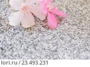 Купить «oleander on marble table», фото № 23493231, снято 29 августа 2016 г. (c) Майя Крученкова / Фотобанк Лори
