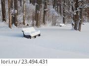 Купить «В зимнем парке», эксклюзивное фото № 23494431, снято 23 января 2016 г. (c) Елена Коромыслова / Фотобанк Лори