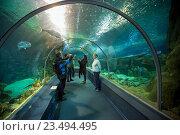 Купить «Sochi Discovery World Aquarium. Russia», фото № 23494495, снято 11 февраля 2016 г. (c) Сергей Лаврентьев / Фотобанк Лори