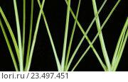 Купить «Приготовление салат Фунчоза с креветками и овощами», видеоролик № 23497451, снято 7 сентября 2016 г. (c) Инга Ерамасова / Фотобанк Лори