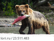Купить «Хороший улов», фото № 23511483, снято 3 августа 2016 г. (c) Лия Покровская / Фотобанк Лори