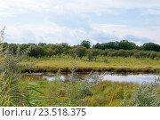 Купить «Пруд покрытый тиной среди поля и леса», фото № 23518375, снято 23 августа 2016 г. (c) Катерина Белякина / Фотобанк Лори