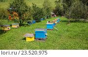 Пасека пчелы медоносной. Стоковое фото, фотограф Татьяна Назмутдинова / Фотобанк Лори