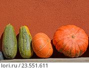 Большие оранжевые и зеленые тыквы на фоне стены. Стоковое фото, фотограф Ирина Борсученко / Фотобанк Лори