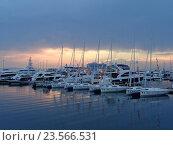 Купить «Парусные яхты и катера у причала в морском порту Сочи», фото № 23566531, снято 21 августа 2016 г. (c) DiS / Фотобанк Лори