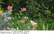 Купить «Flowers in garden during the rain», видеоролик № 23573227, снято 31 июля 2016 г. (c) Володина Ольга / Фотобанк Лори