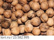 Купить «Грецкие орехи, фон», фото № 23582995, снято 25 сентября 2016 г. (c) Веснинов Янис / Фотобанк Лори