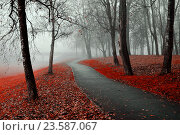 Купить «Misty autumn view of autumn park alley in heavy fog - foggy autumn landscape with bare autumn trees and red fallen leaves», фото № 23587067, снято 6 ноября 2015 г. (c) Зезелина Марина / Фотобанк Лори