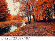 Купить «Autumn bright forest landscape with autumn trees and narrow forest river in cloudy weather.», фото № 23587187, снято 1 января 2009 г. (c) Зезелина Марина / Фотобанк Лори