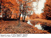 Купить «Autumn picturesque forest landscape - autumn trees and narrow forest river in cloudy weather», фото № 23587207, снято 1 января 2009 г. (c) Зезелина Марина / Фотобанк Лори