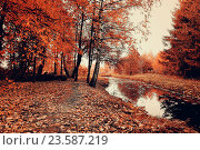 Купить «Autumn trees and narrow forest river in cloudy weather. Autumn picturesque landscape in pale colors», фото № 23587219, снято 1 января 2009 г. (c) Зезелина Марина / Фотобанк Лори
